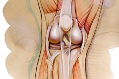 Editorial-Yoga-Journal-Anatomy-of-Knee