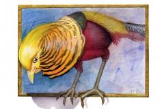 NatSci-Golden-Pheasant