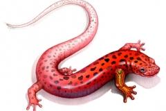 NatSci-Salamander-Leg-Regeneration
