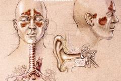 Pharm-Sinusitus